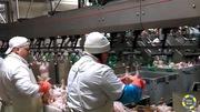 Работник производственной линии птицефабрики в Польше